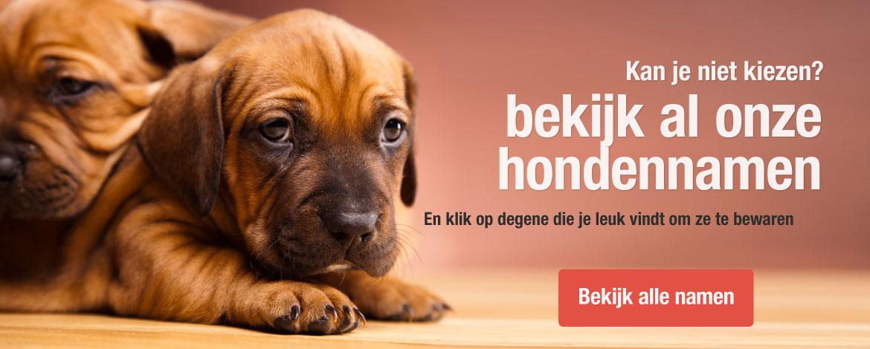 3b9e3f3c00043d Hondennamen - Vind de perfecte naam voor je hond.