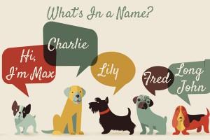 5 tips voor het kiezen vaan een hondennaam