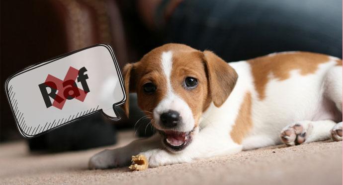 Tip 3: Hondennaam die niet te verwarren is met een commando (of andere naam)